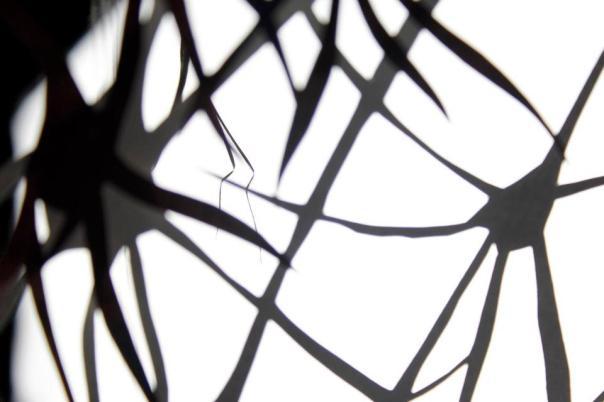 Neurons 8